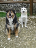 Cookie et Malou
